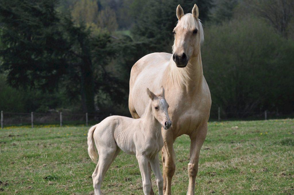 horses-743905_1280