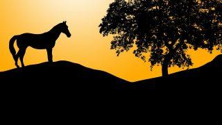 皆さんの中で最強馬を1頭上げるとしたらどの馬だろうか?
