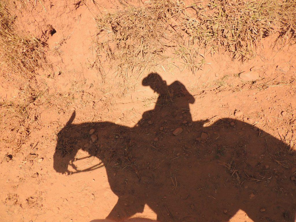 horse-935073_1280