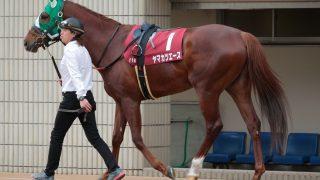 【宝塚記念2016出走馬】中距離で頭角を現したヤマカツエース