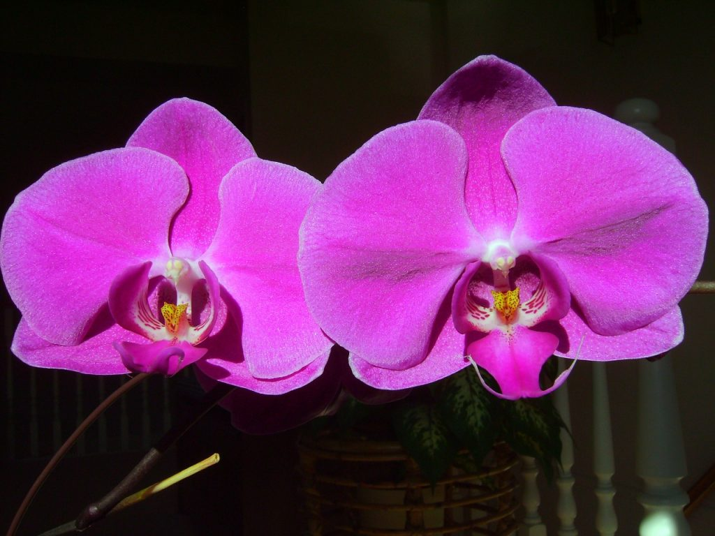 orchid-383423_1280