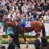 【チャレンジC予想2016】1800mは今年で最期、牝馬の逃げで波乱も・・・?
